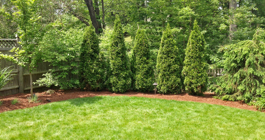 10 Ideas For Landscaping Property Lines
